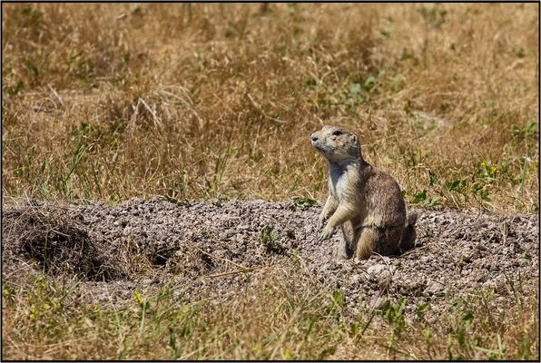 South Dakota | Prairie Dog Town |