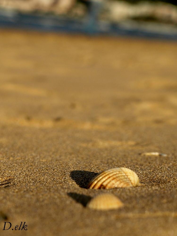 Souvenir de playa