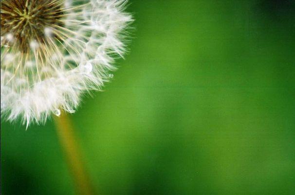 soweit der Wind mich trägt...