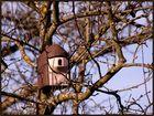 Soziale Vogelbau AG sucht Mieter für 1 Zimmerapartment