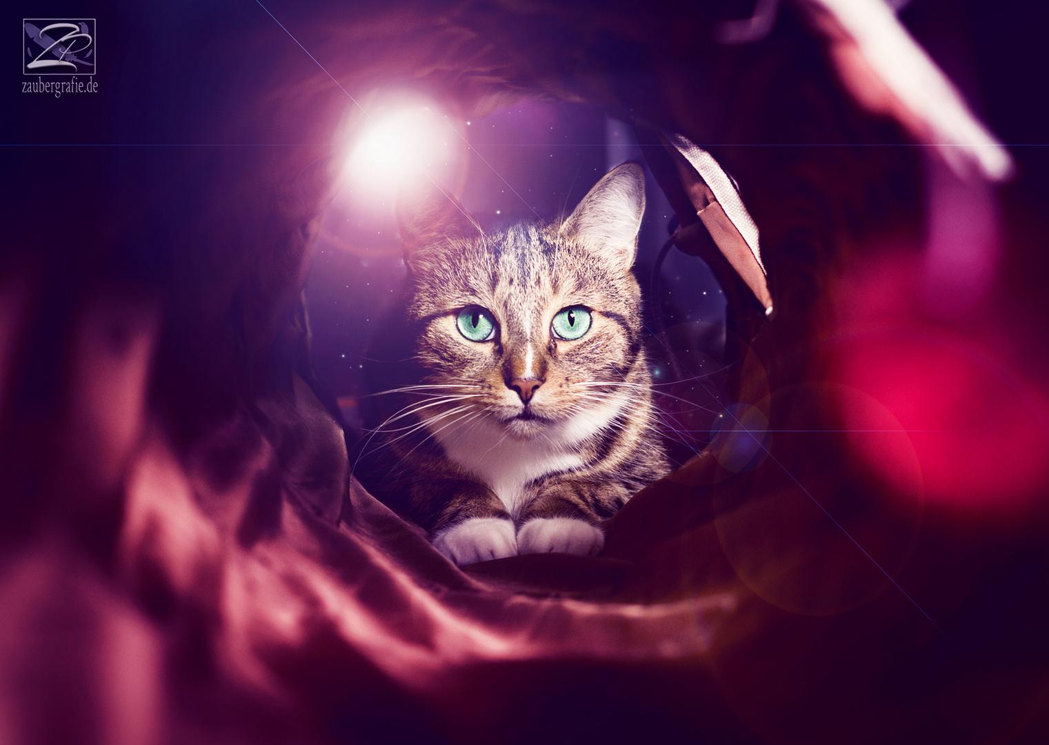 Spacecat :D