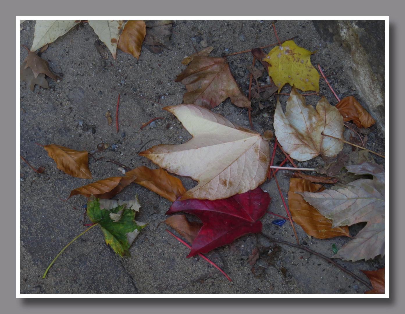 spät Nachmittags : schönen Sturm-Herbst getroffen,