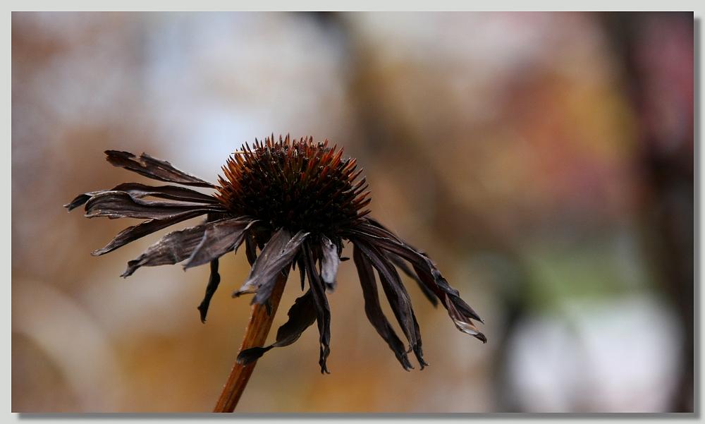 Später Herbst (1)