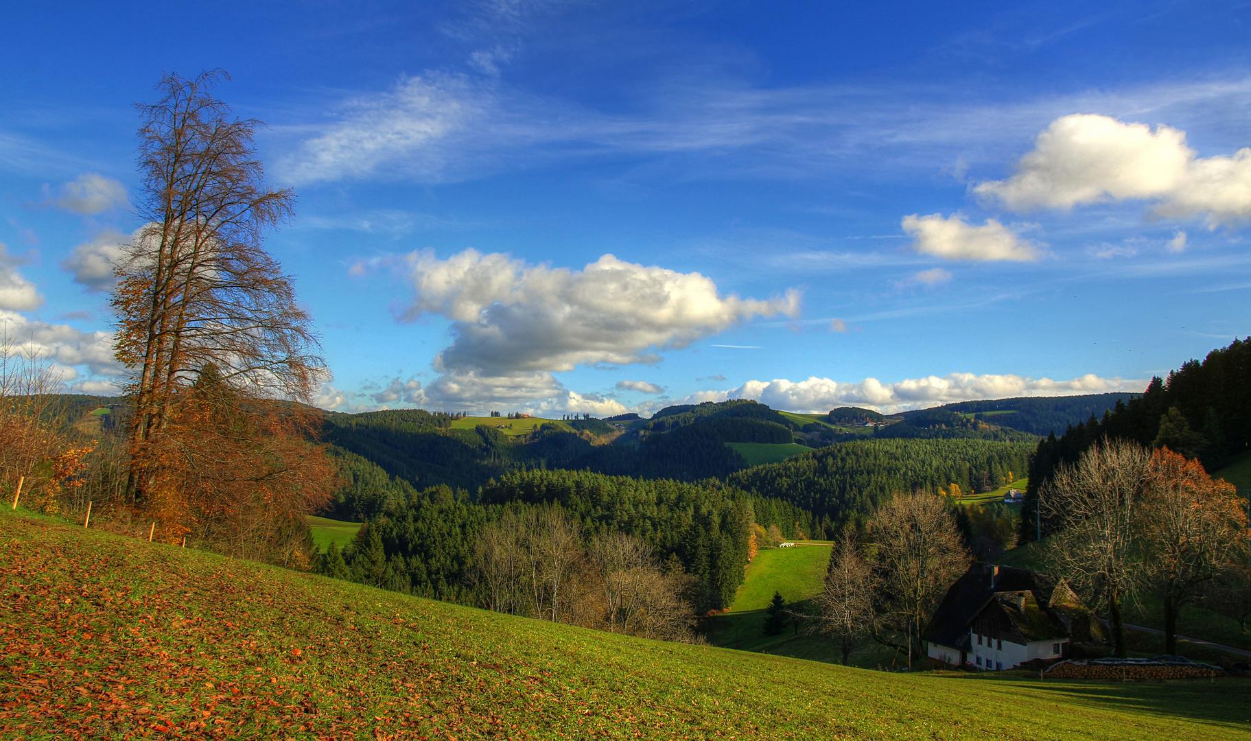 Spätherbsttag im Schwarzwald