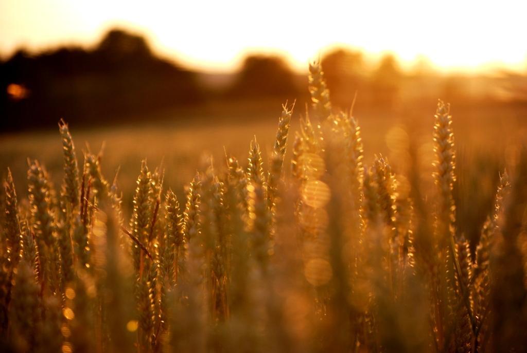 Spätsommer  Spätsommer Foto & Bild | landschaft, natur, sonne Bilder auf ...