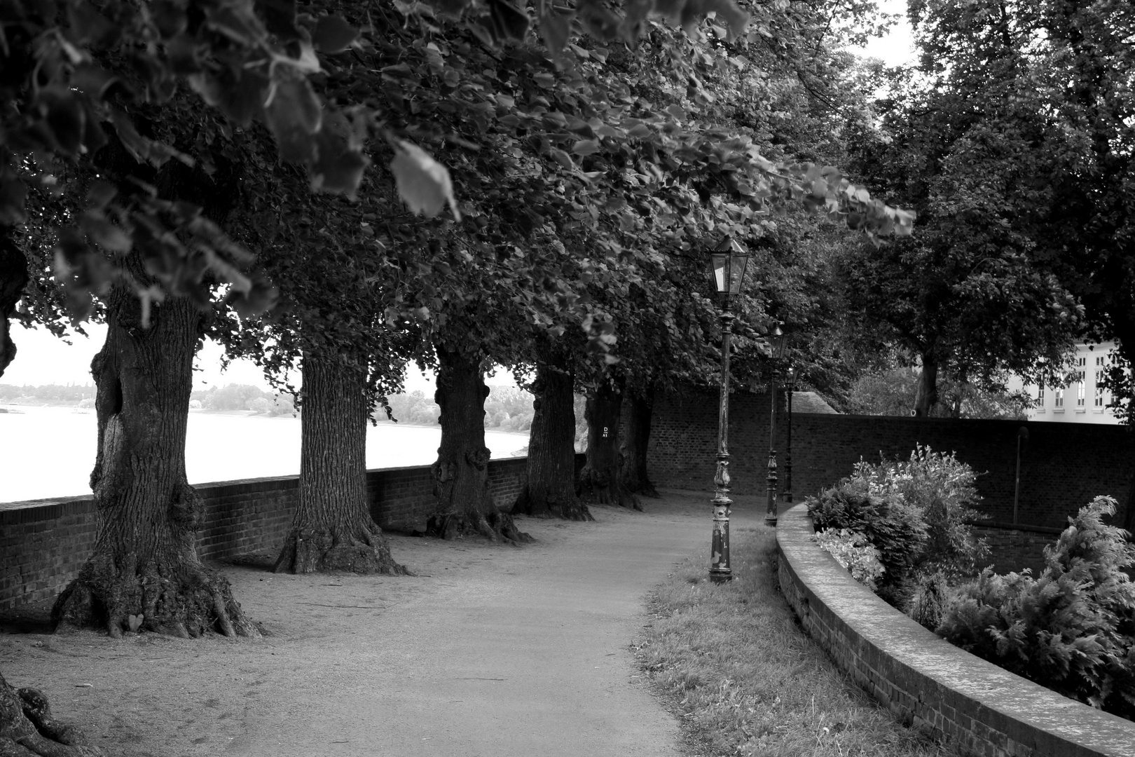 Spätsommer am Rhein