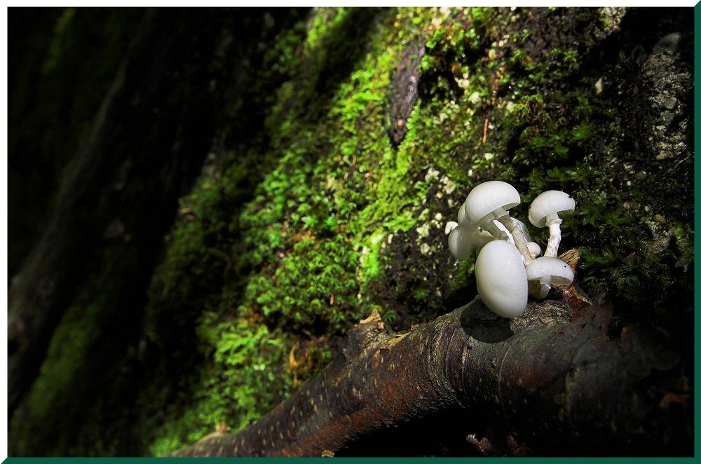 Spätsommer im Wald