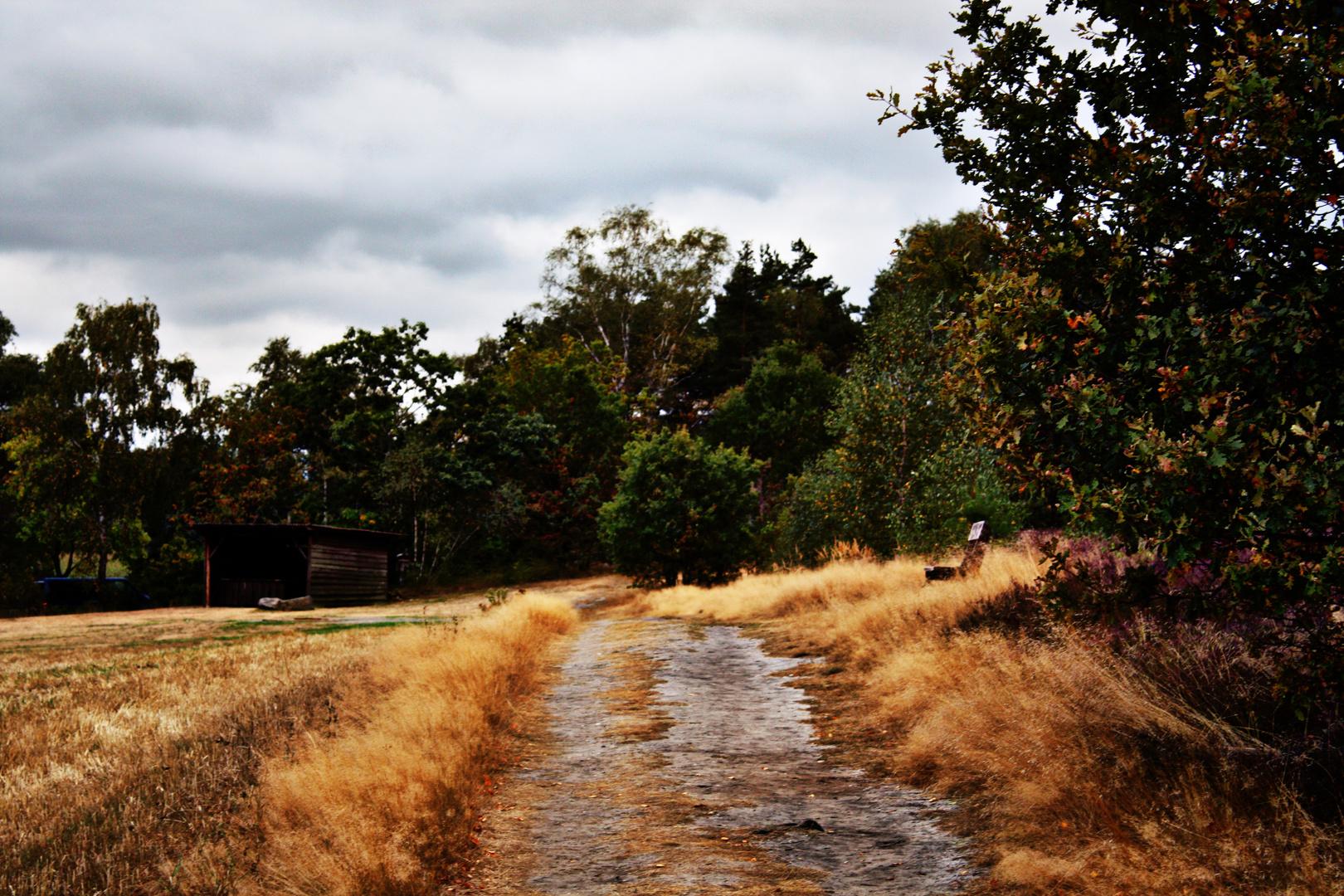 Spätsommer in der Heide