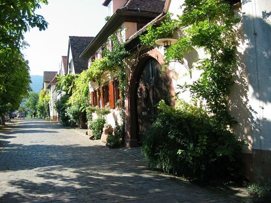 Spätsommer in Rhodt/Südl.Weinstrasse