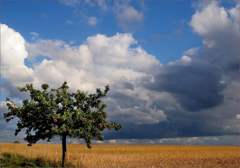 Spätsommer - Landschaft....