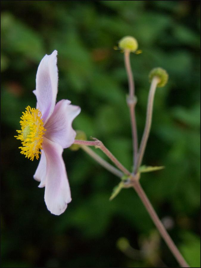 Spätsommerblüte