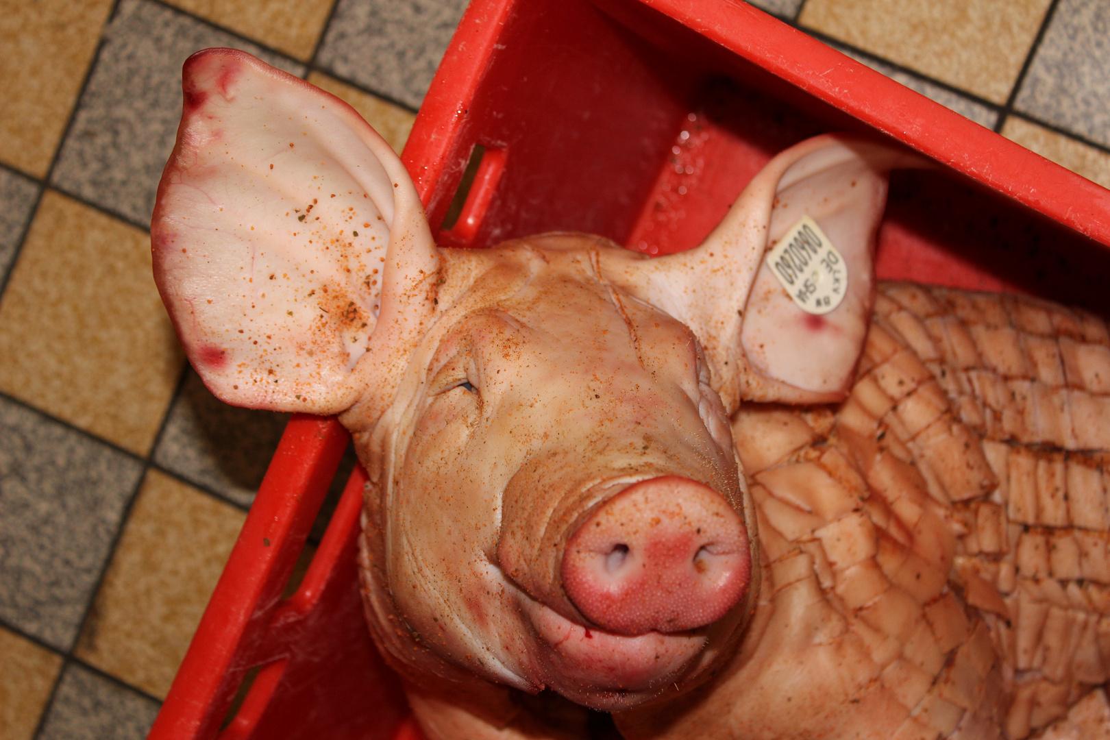 spanferkel vom glücklichen schwein