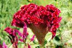 ..spanische Blumen..