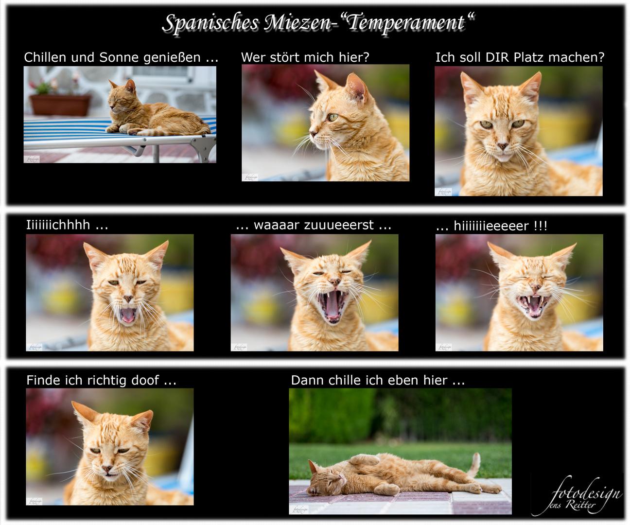 """Spanisches Mietzen-""""Temperament"""""""
