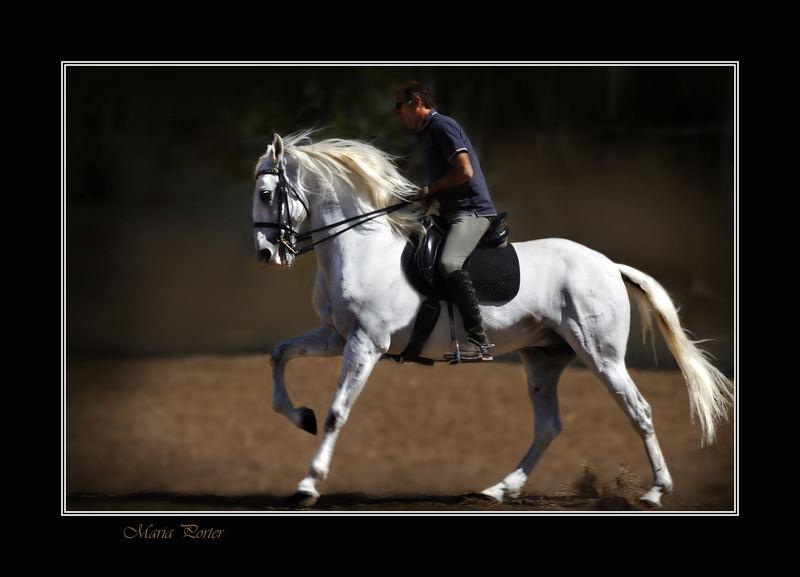 Spanish horse 1