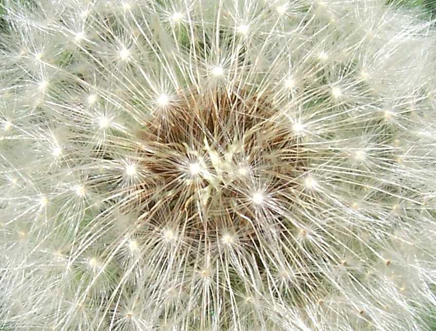 sparkling blowball
