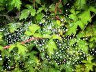 Sparkling Drops
