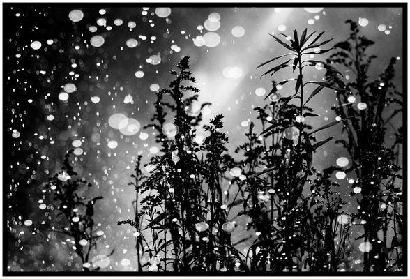 sparkling raindrops 1