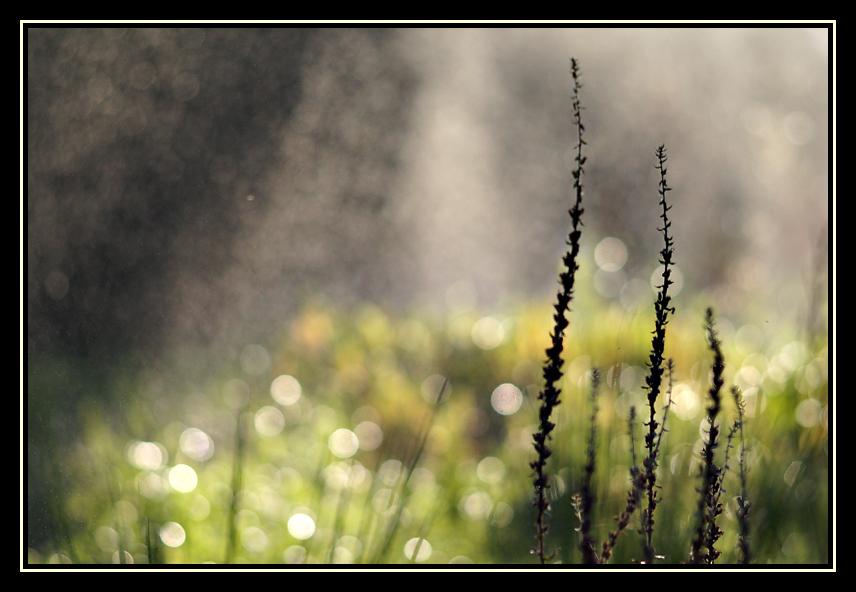 sparkling raindrops 3