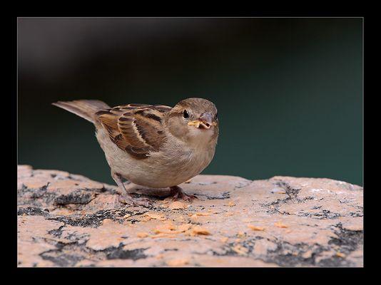 ~ Sparrow ~