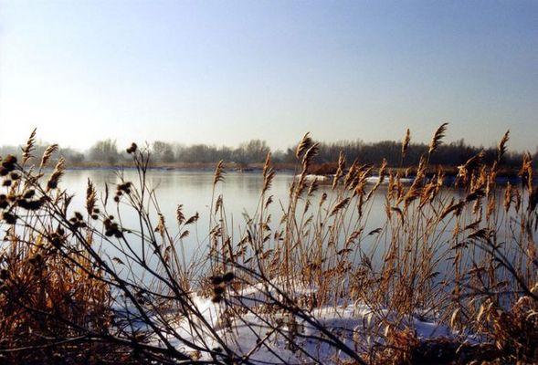 Sparsamer Winter