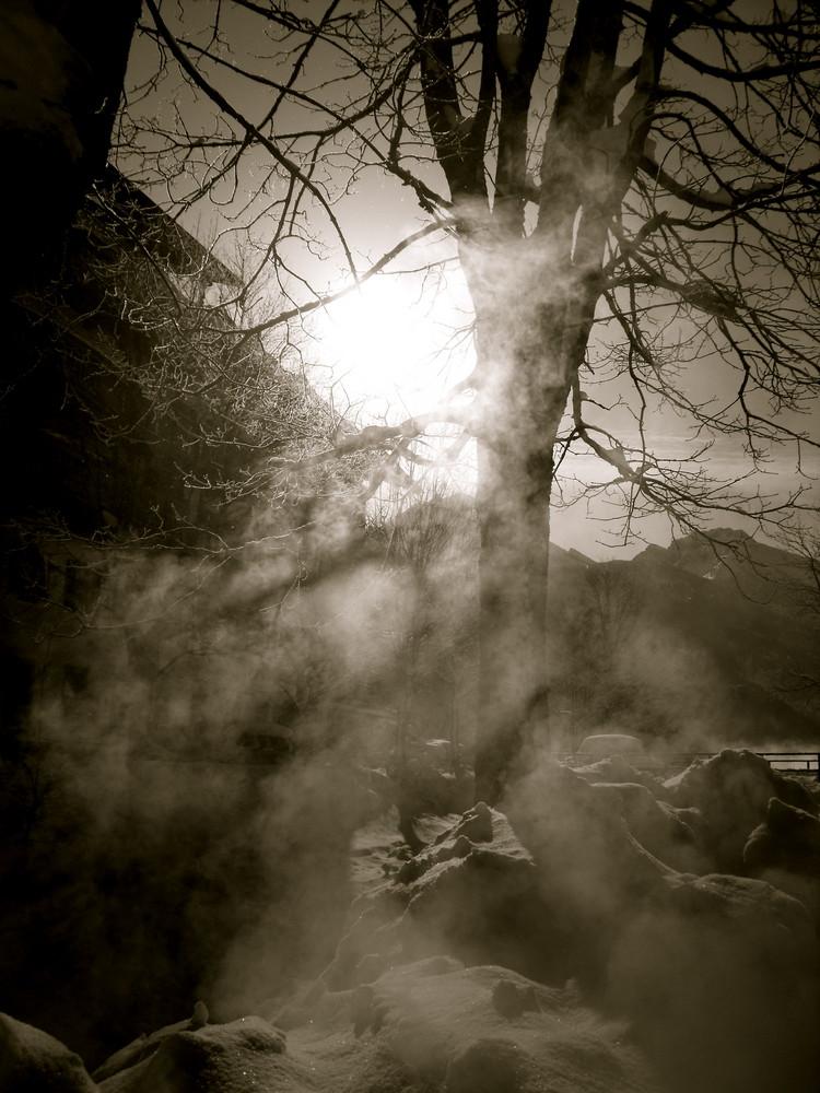 Spartiate de la forêt