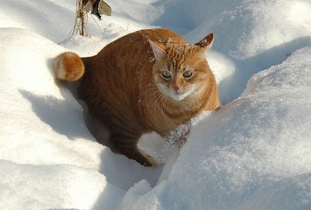 Spaß am Schnee