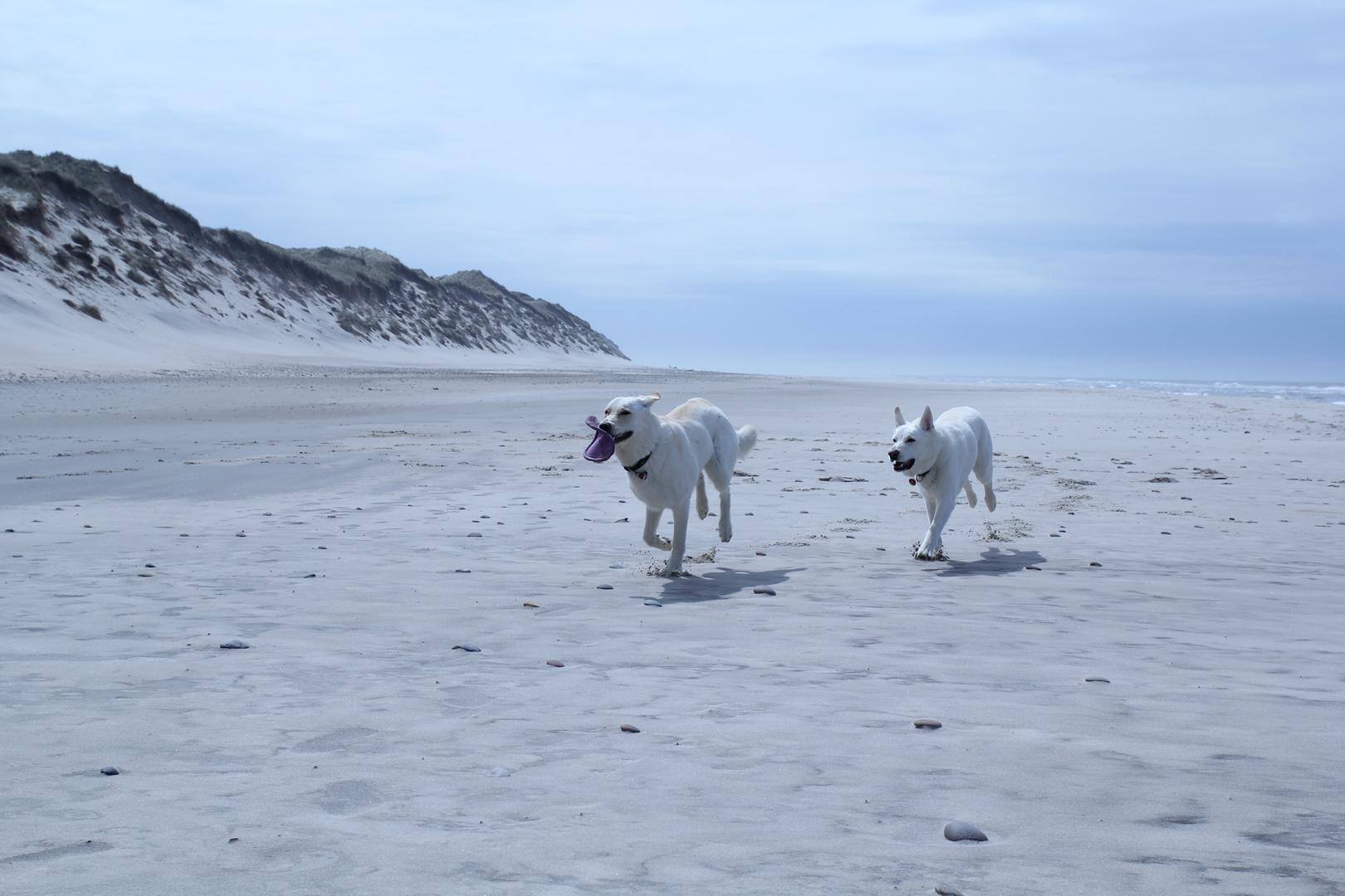 Spass am Strand!!!