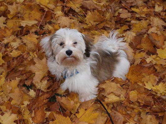 Spaß im Herbst