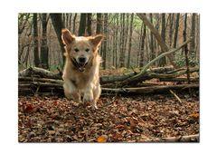 Spass im Novemberwald
