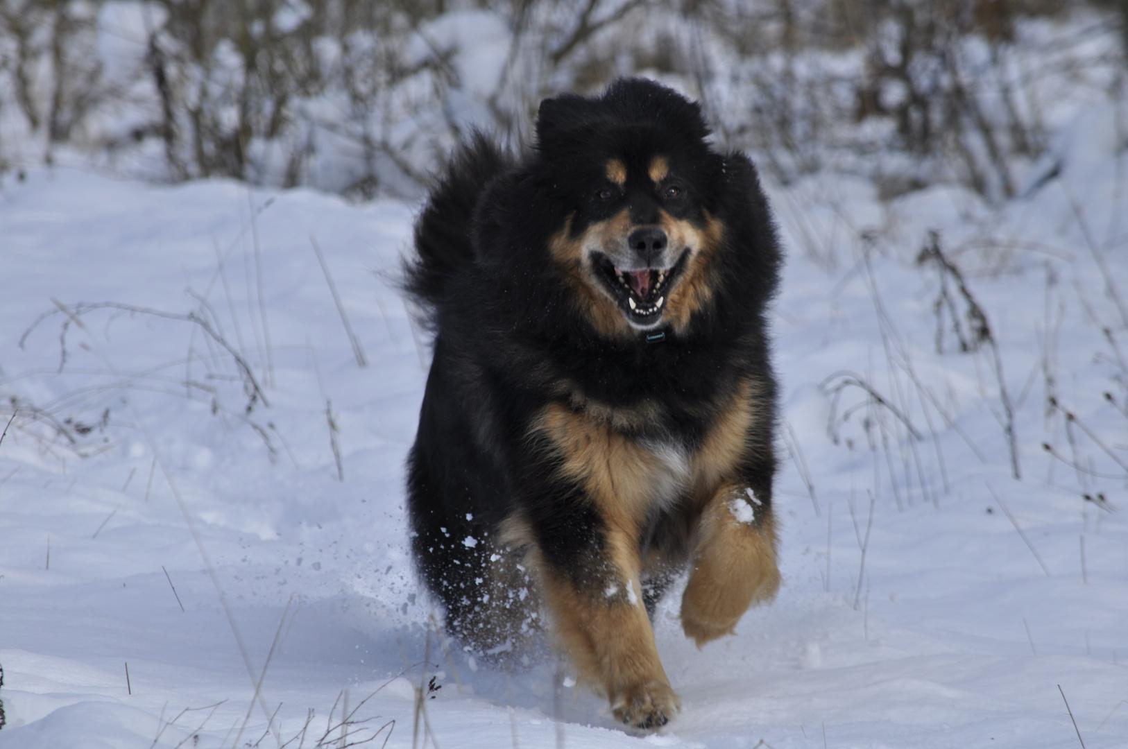 Spaß im Schnee. Ein Tibeter auf der Halde