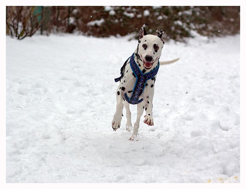 [Spaß im Schnee] oder [...einfach mal den Tag genießen]