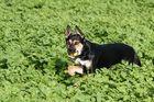 Spaß mit Hund im Feld #4