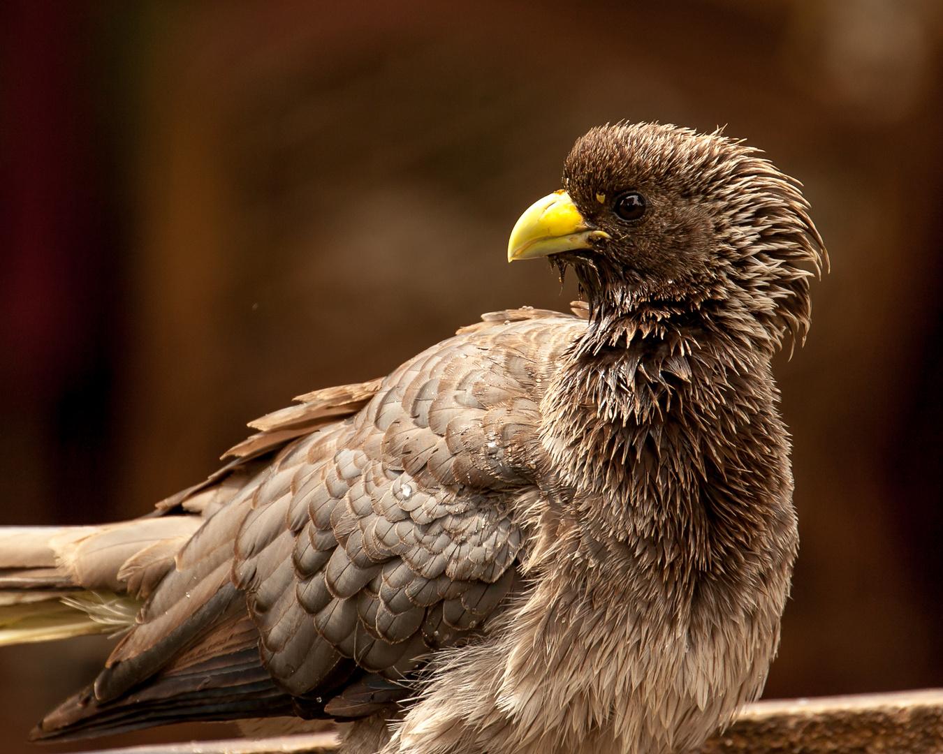 Spassvogel