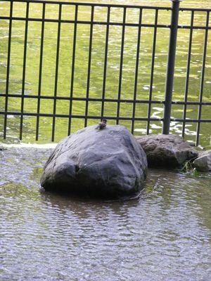 Spatz auf einem Stein im Volkspark Friedrichshain