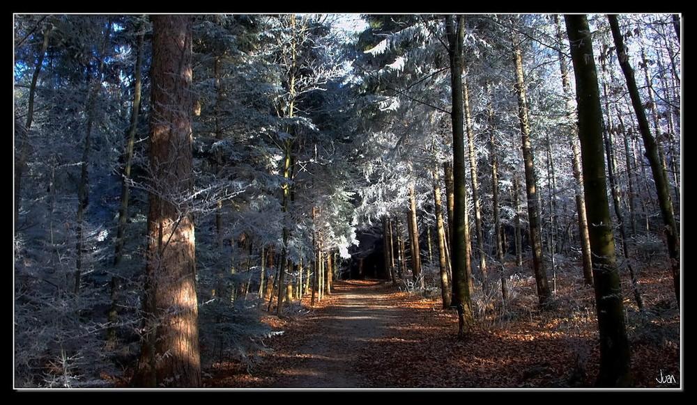 spazieren im Wald