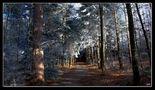 spazieren im Wald by Juan