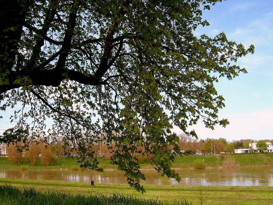 Spaziergang am Neckar