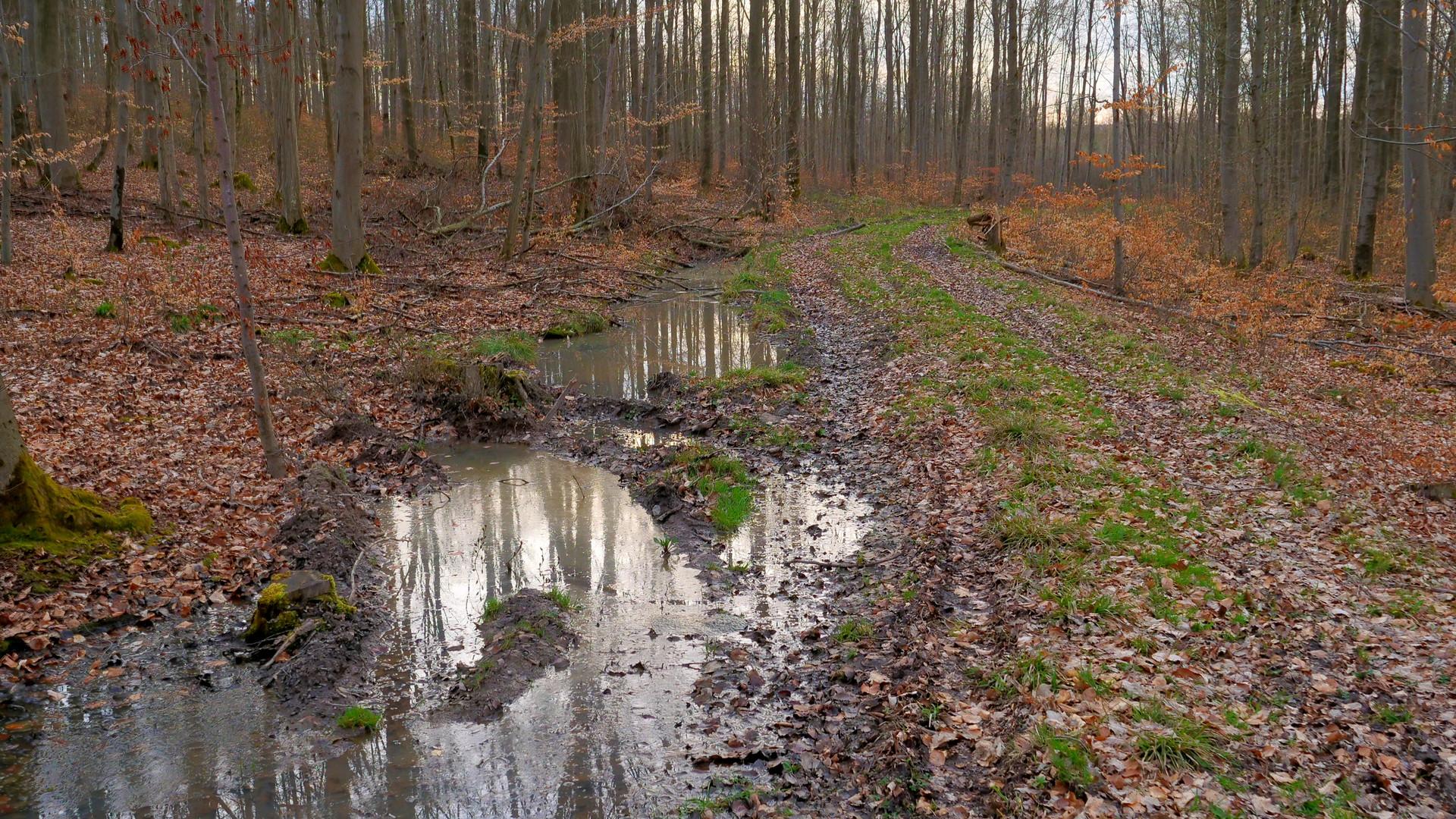 Spaziergang durch den Wald (paseando por el bosque)