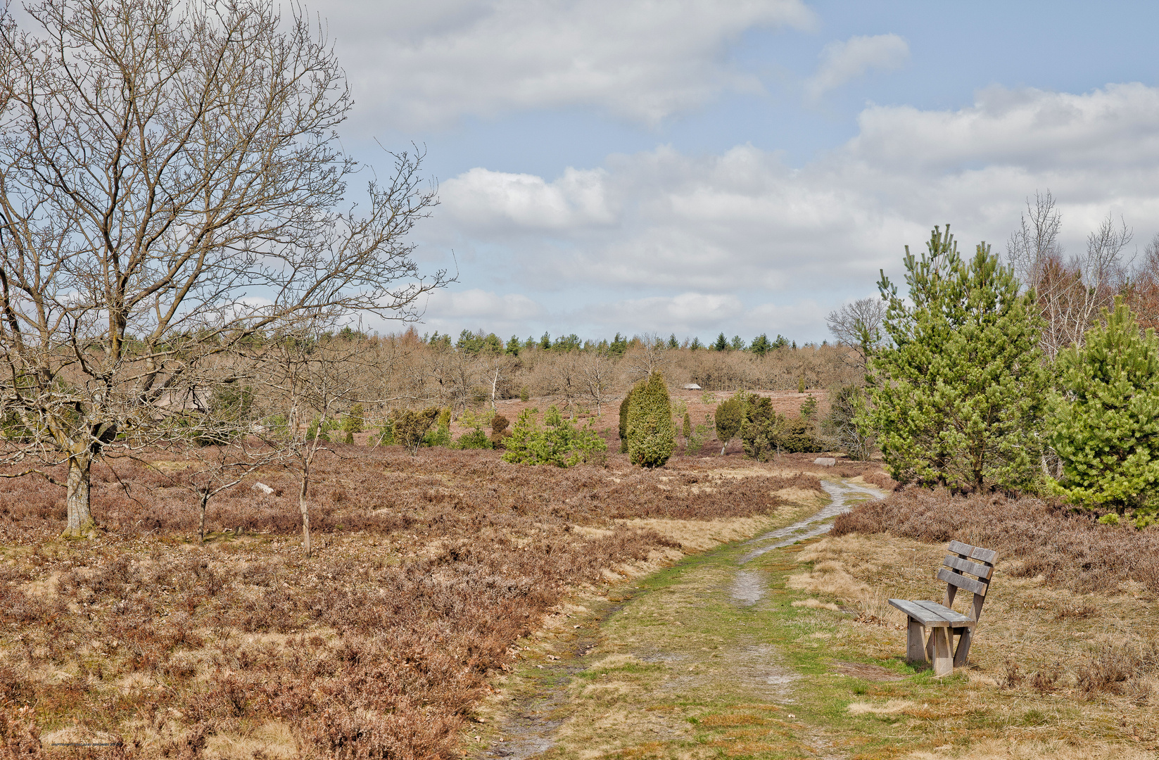 Spaziergang durch die Heide