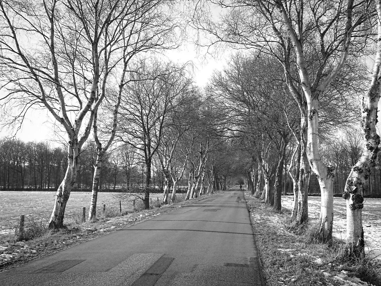Spaziergang im Ammerland