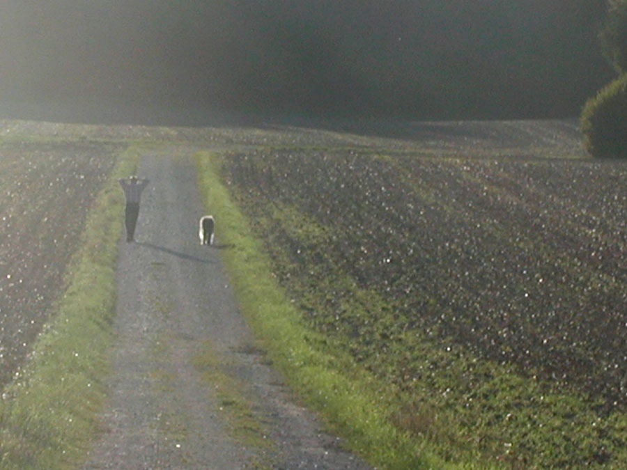 Spaziergang, im Gegenlicht später Sonne
