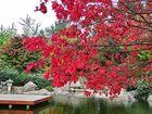 Spaziergang im japanischen Garten