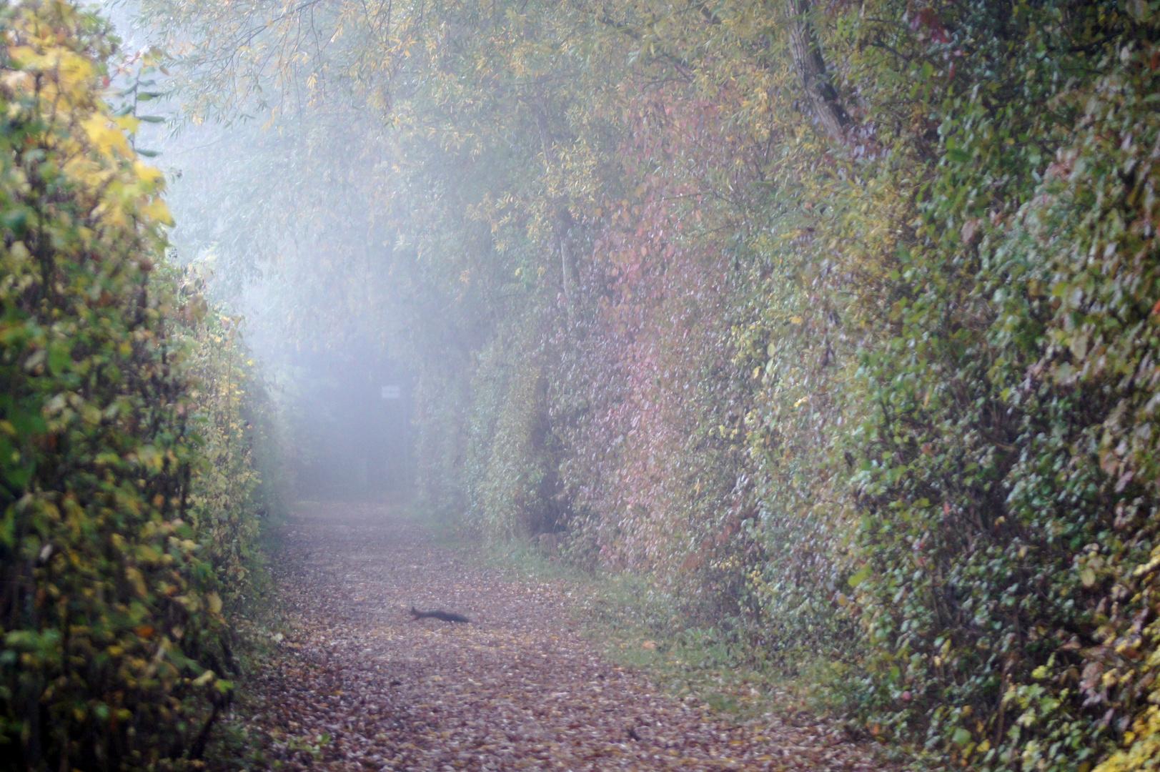Spaziergang im Morgennebel