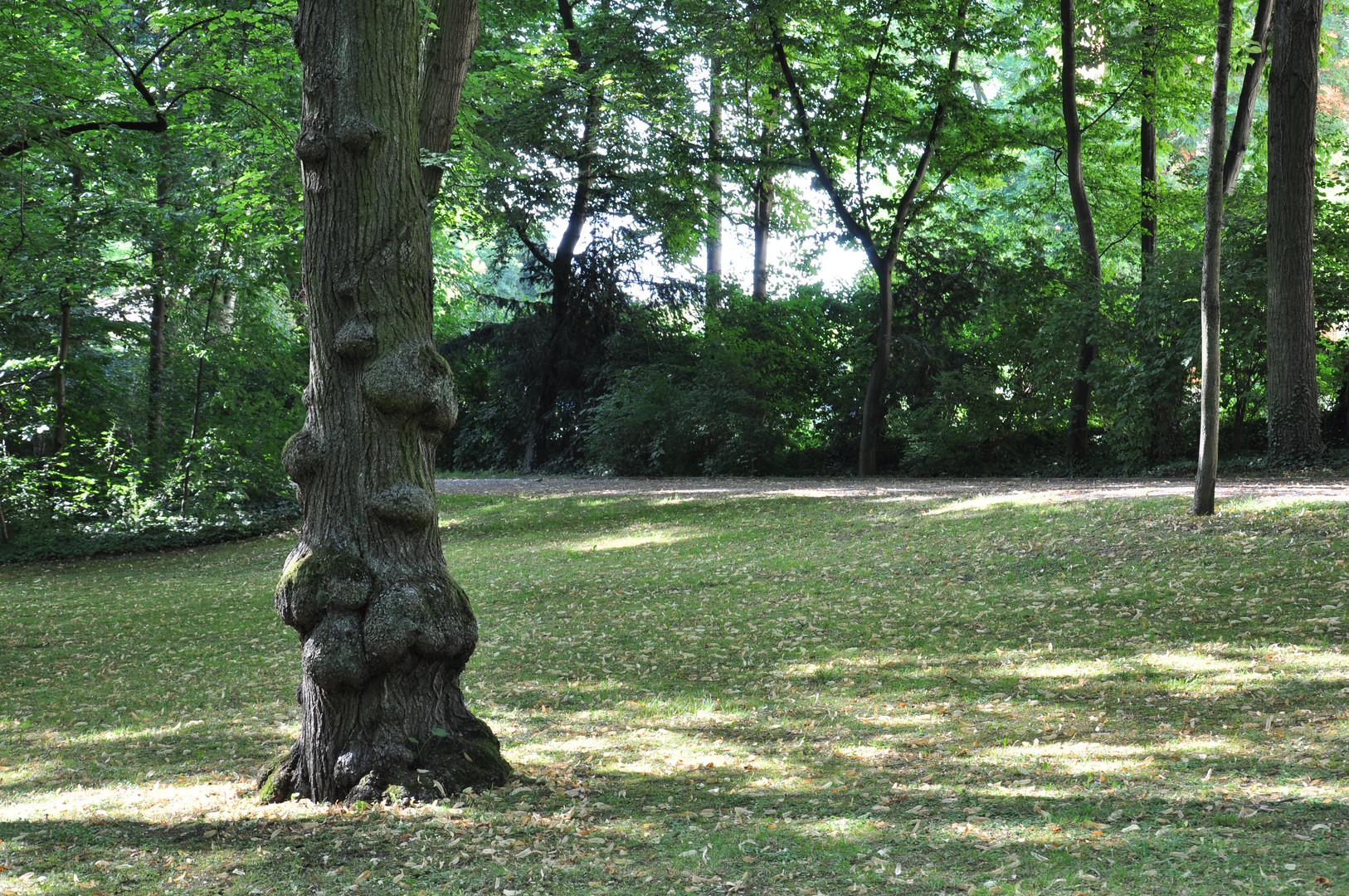 Spaziergang im Park, ungewöhnlicher Baum