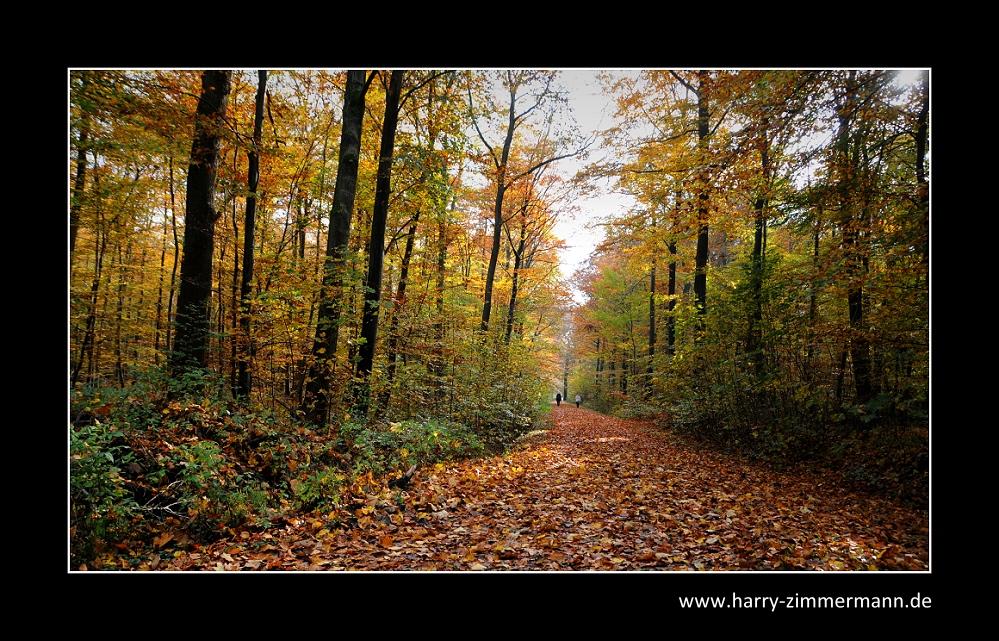 Spaziergang im Rantzauer Forst