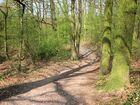 Spaziergang im Stadtwald