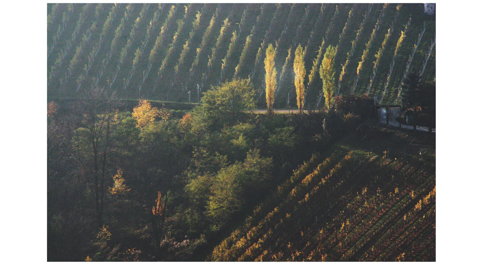 Spaziergang im Süden der Steiermark