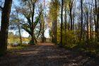 Spaziergang im Wald