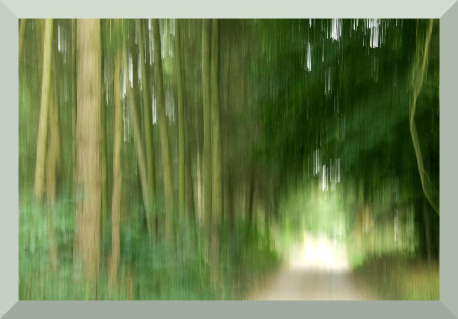 Spaziergang im Wald.